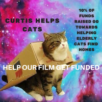 CURTIS HELPS CATS